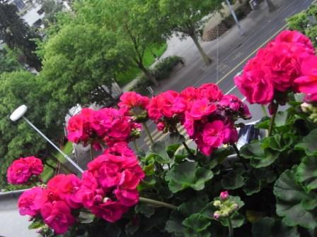Gardening 09