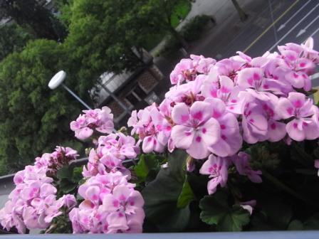Gardening 08