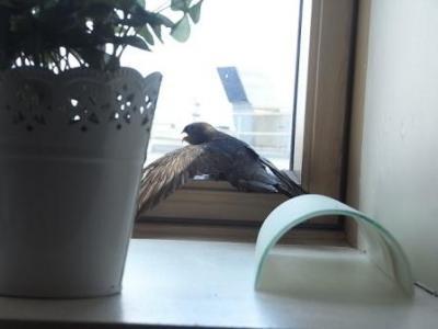 迷い鳥01