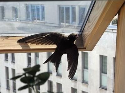 迷い鳥02