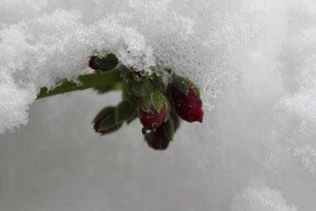 ジュネーブ大雪05