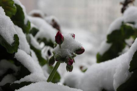 ジュネーブ大雪03