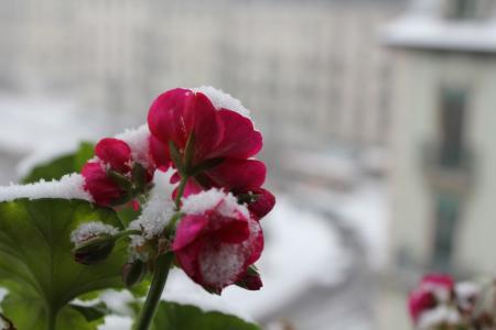 ジュネーブ大雪02