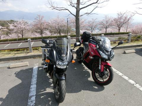 桃の花0405-4