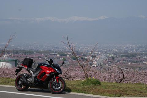 桃の花0405-2