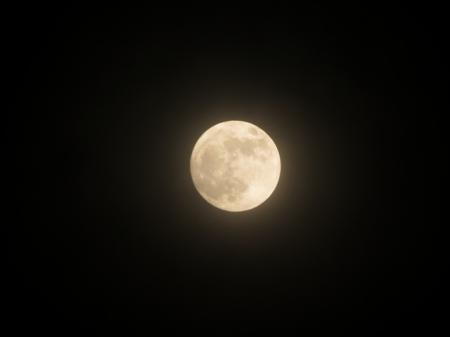 中秋の名月!月の中は…