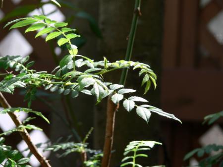 木の芽時(コノメドキ)