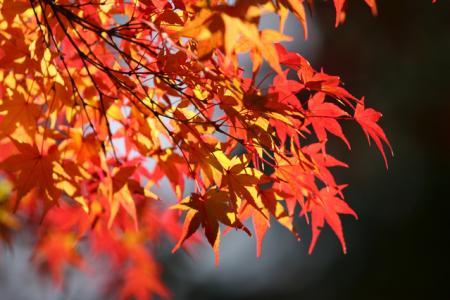 美しい紅葉を見るには朝晩の寒さも大切