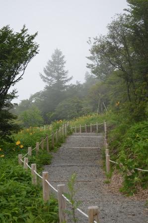 霧降高原キスゲ平園地