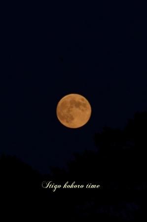 お月見の日♪