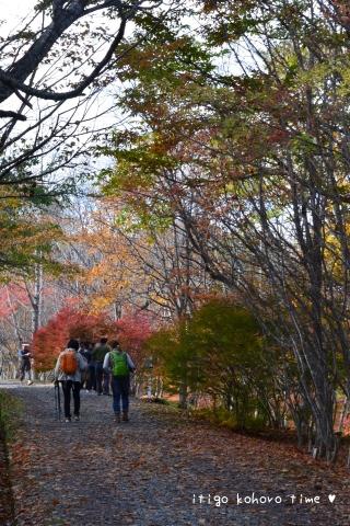 秋の色の道