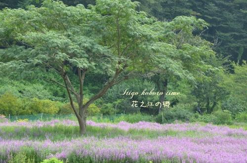 花之江の郷