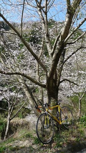 20130330 雨山坂 04