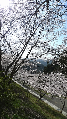 20130330 雨山坂 03