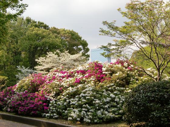 大阪城公園2011春02
