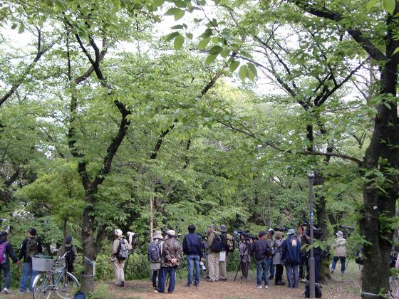 大阪城公園2011春04