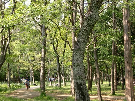 大阪城公園2011春05