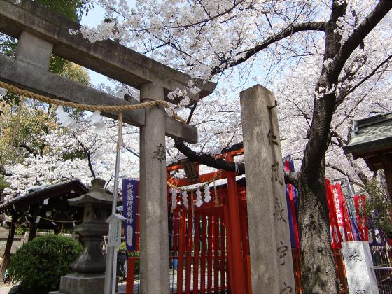大阪で撮った桜2013-01