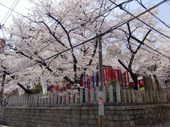 大阪で撮った桜2013-02