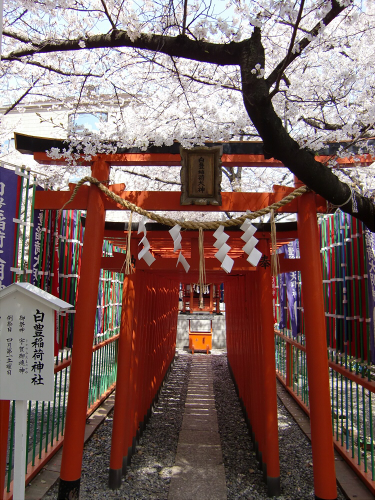 大阪で撮った桜2013-03