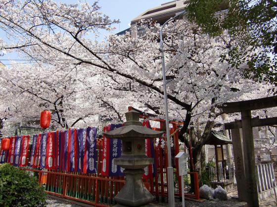 大阪で撮った桜2013-04