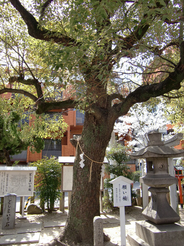 大阪で撮った桜2013-05