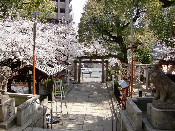 大阪で撮った桜2013-09