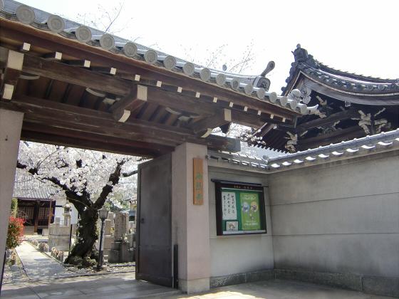 大阪で撮った桜2013-12