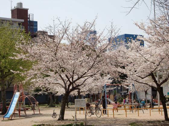 大阪で撮った桜2013-17