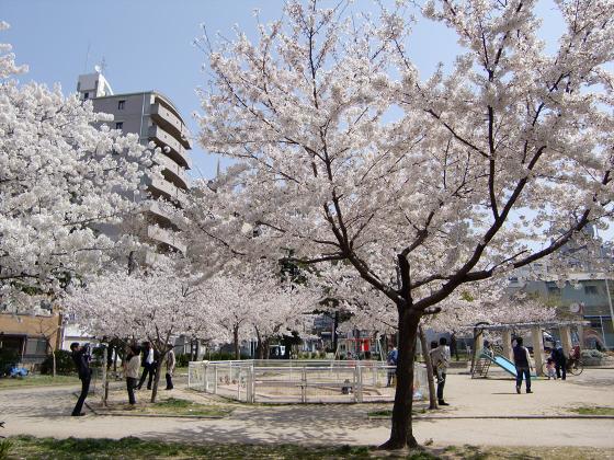 大阪で撮った桜2013-18