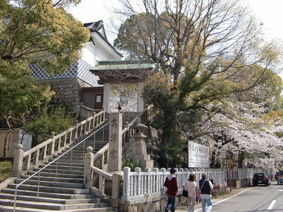 大阪で撮った桜2013-22