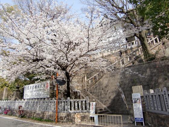 大阪で撮った桜2013-23