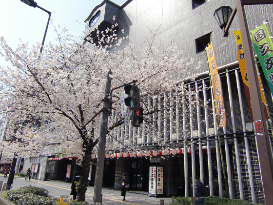 大阪で撮った桜2013-24