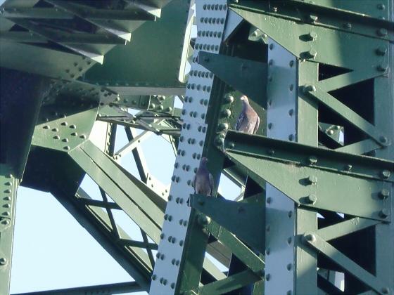 近鉄澱川橋梁11