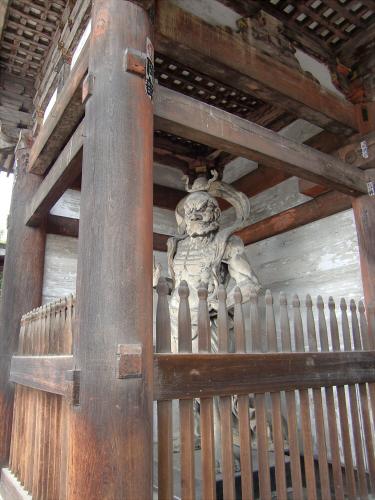 仁和寺の御室桜03