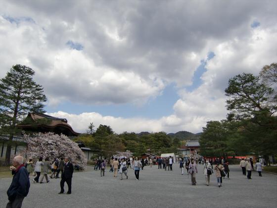 仁和寺の御室桜04