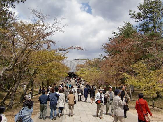 仁和寺の御室桜22