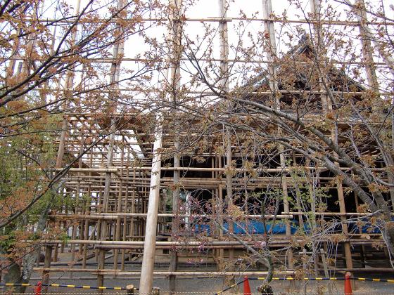 仁和寺の御室桜27