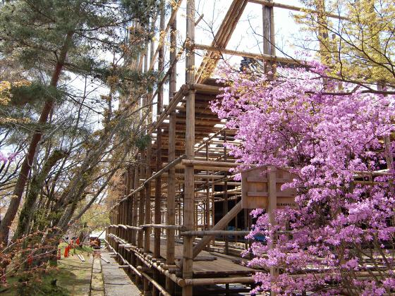 仁和寺の御室桜30