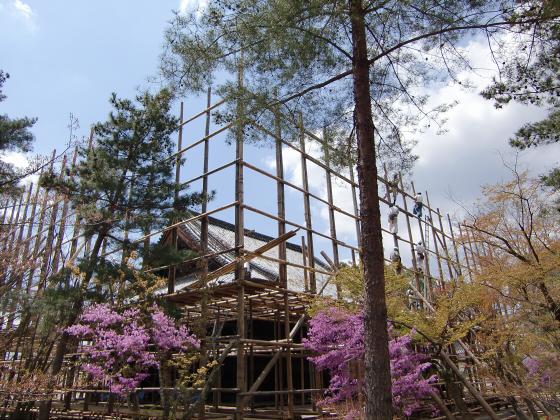 仁和寺の御室桜31