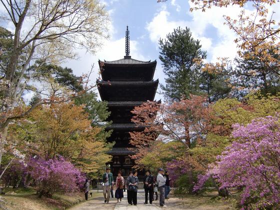 仁和寺の御室桜34