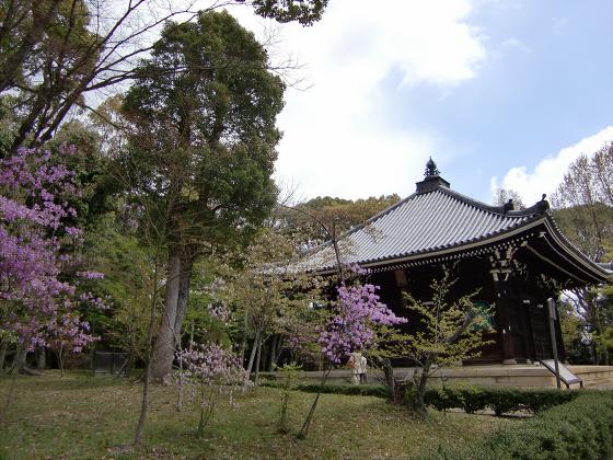 仁和寺の御室桜38