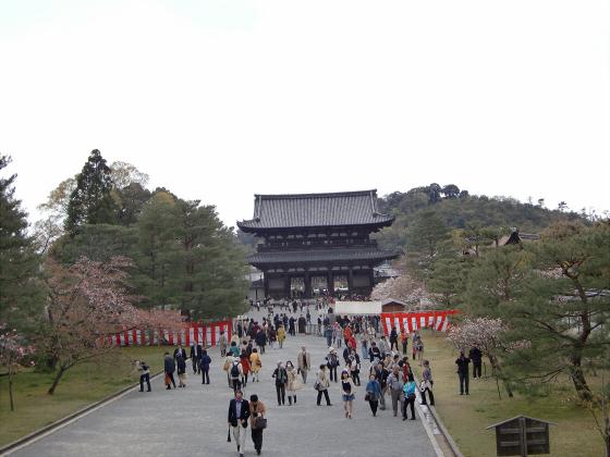 仁和寺の御室桜40
