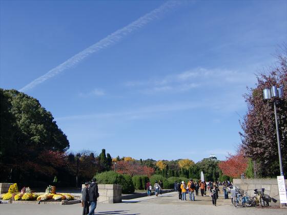 大阪城の紅葉2012-01