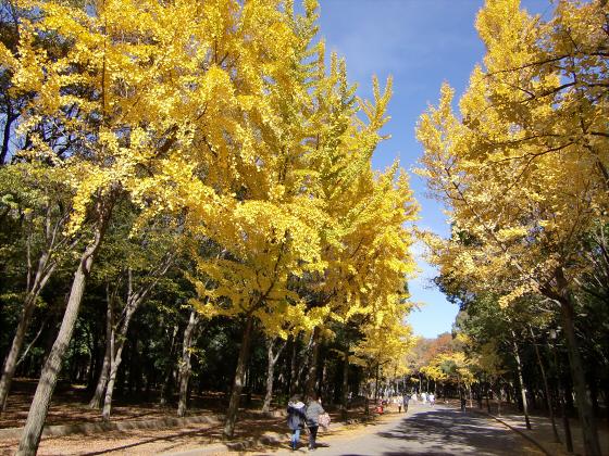 大阪城の紅葉2012-04