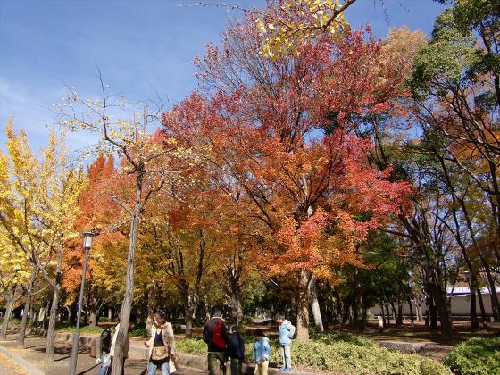 大阪城の紅葉2012-05