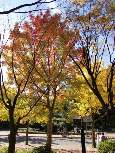 大阪城の紅葉2012-10