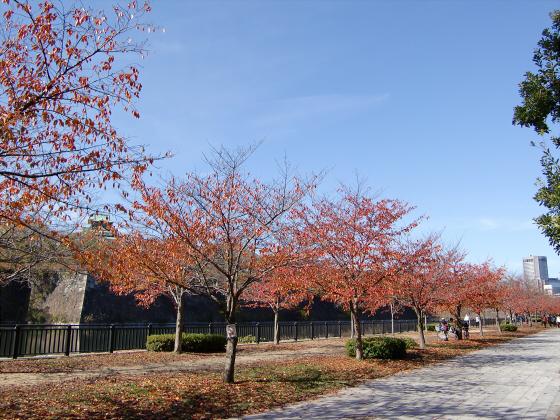 大阪城の紅葉2012-11
