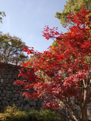 大阪城の紅葉2012-16