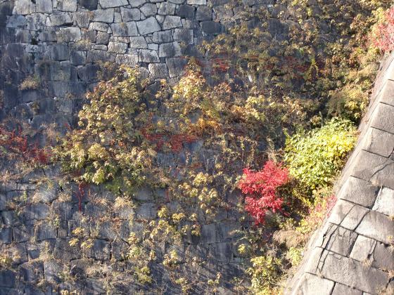 大阪城の紅葉2012-24
